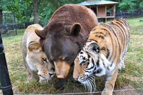 Noah's Ark Animal Adventure